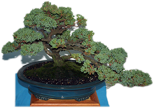 Bonsai Society